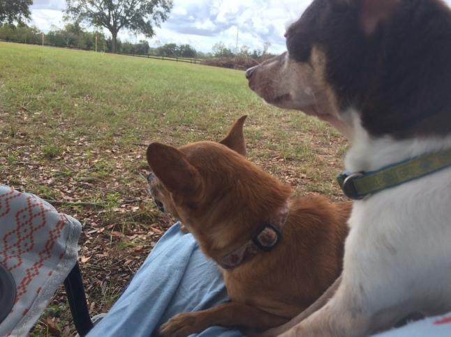 Max and BeBe